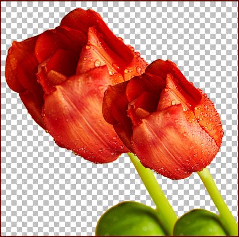 Immagine Riflessa In Un Mosaico Di Vetro Con Paint Shop Pro Pagina